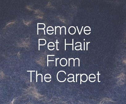 Remove Pet Hair From The Carpet