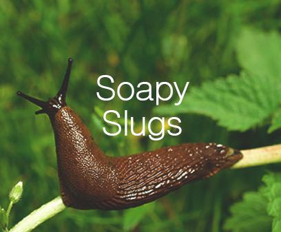 Soapy slugs