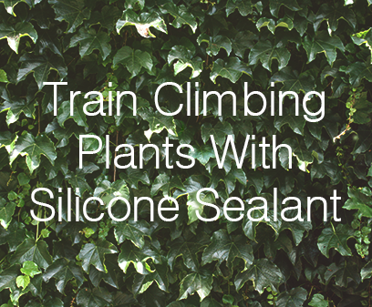 Train Climbing Plants With Silicone Sealant