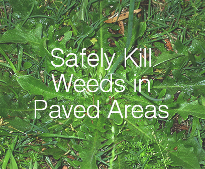 Safely kill weeds in paved areas